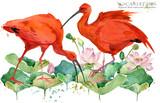 Scarlet ibis. tropical bird watercolor illustration