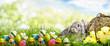 Leinwandbild Motiv hase mit Korb eiern in der natur landschaft
