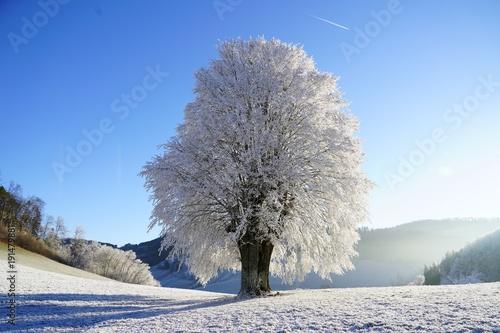Foto op Aluminium Lavendel winter