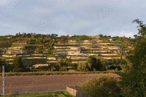 Fotobehang Diepbruine Weinanbau an der Unstrut