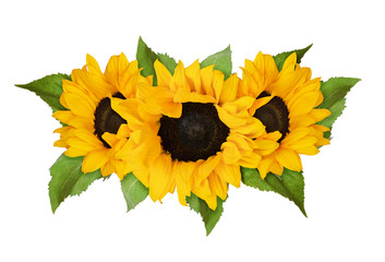 Three yellow sunflowers and green leaves in summer arrangement