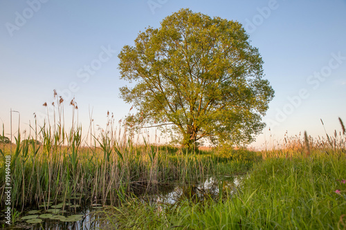 Fotobehang Zomer Lonely tree on the field in summer day