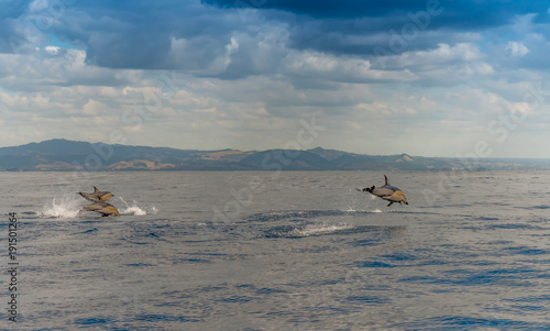 Fotobehang Dolfijn Wettschwimmen