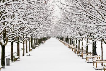 A garden in Paris under the snow