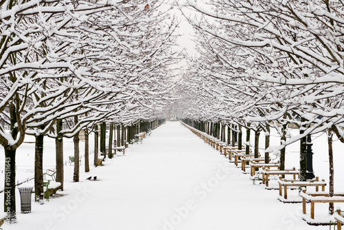 Foto op Aluminium Parijs A garden in Paris under the snow