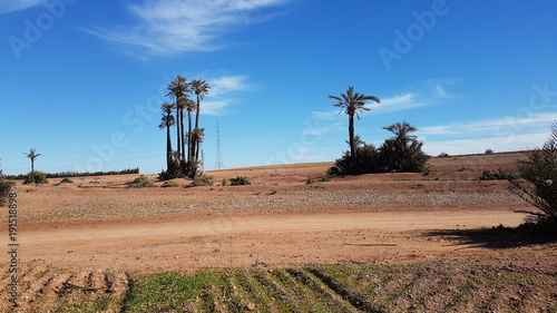 Staande foto Zalm Palms atrees of Morocco