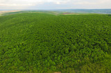 Dron View on Green Forest