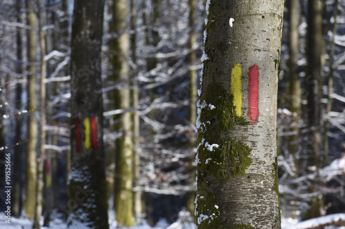 foret bois Ardennes Wallonie environnement planete nature neige hiver meteo marquage chasse