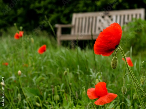 Fotobehang Klaprozen Mohnblüte vor einer Gartenbank