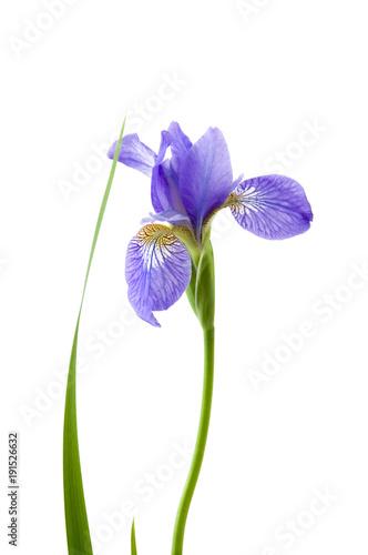 Aluminium Iris Iris