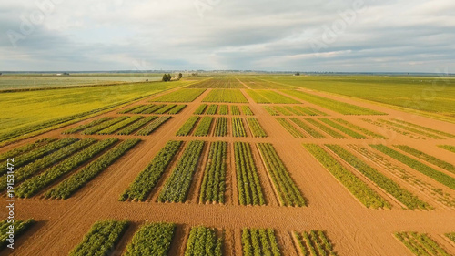 Papiers peints Miel Aerial view of agricultural, cultivated fields. Agricultural landscape.Irrigated farmland