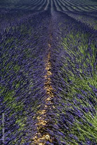Foto op Canvas Lavendel Champ de lavande à Saint-Jurs, Alpes-de-Haute-Provence, France