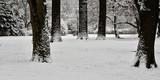 Winterlandschaft  - 191546694
