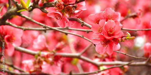 Foto Murales La primavera in arrivo