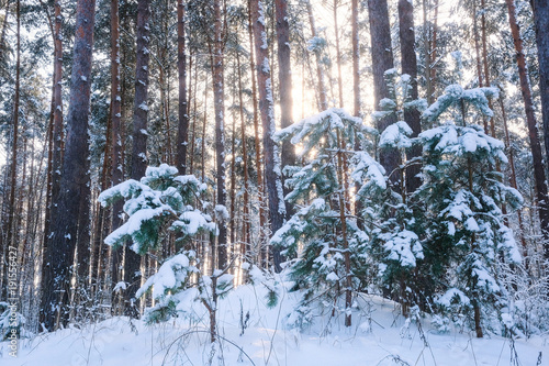Foto op Canvas Grijs Landscape with the omage of a winter forest