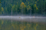 Foggy and quiet pond with spruce and birch reflections on a summer morning, Cortina d'Ampezzo, Dolomites, Italy - 191556870