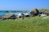 Grass and yellow dandelion flowers at the rocky sea shore
