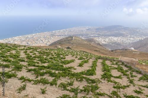 Fotobehang Santorini Wine filed in Santorini with view towards sea