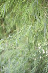 photo of bamboo trees