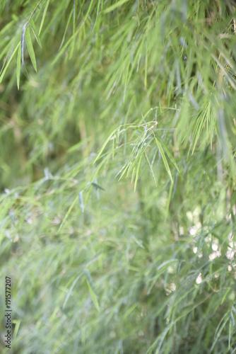 Fotobehang Bamboe photo of bamboo trees