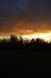 orange sunset coastal grass thickets - 191577481
