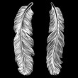Tribal decorative bird feathers, hand drawn. Vector. - 191582063