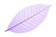 Purple decorative skeleton leaf on white