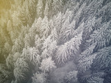 aerial shot during a snow storm of a beautiful forest of evergreen trees. White forest shoot from drone. Farytale