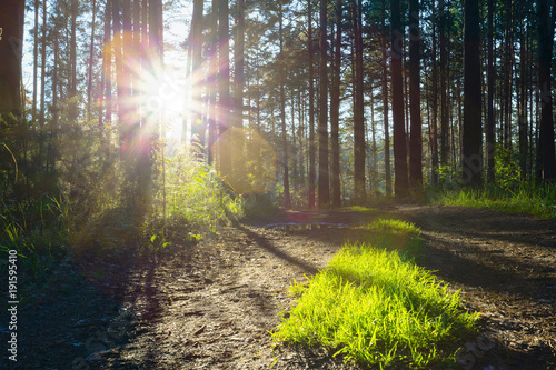 Foto Murales sunset in the woods