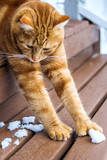 Ginger Kitteh stretching on stairs - 191596445
