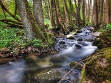 Blurred stream in the woods - 191610831