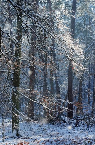 Gorges d'Apremont sous la neige en forêt de  Fontainebleau