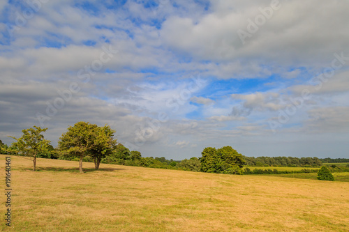 Keuken foto achterwand Honing Green Fields