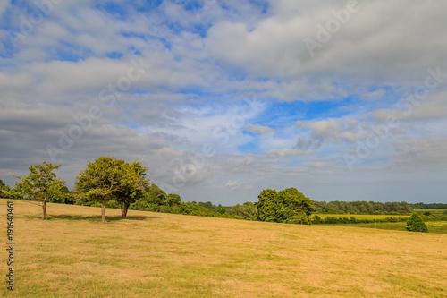 Fotobehang Honing Green Fields