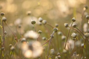 Sommerwiese im Abendlicht