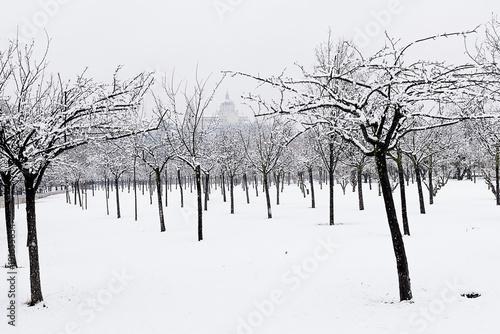 Foto op Plexiglas Madrid Almendros nevados en la casa de campo de Madrid con vistas a la catedral de la Almudena