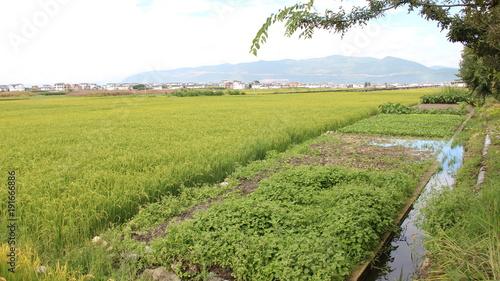 Fotobehang Pistache yellow fields landscape