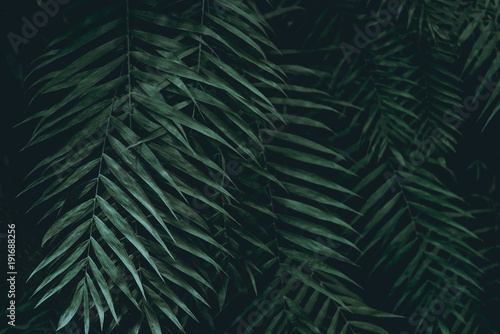 Plant background - 191688256