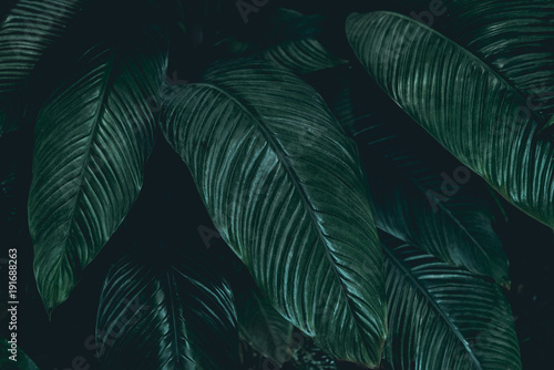Plant background - 191688263