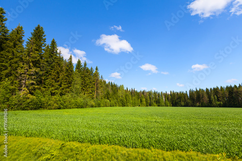 Fotobehang Zomer Summer landscape, empty green field