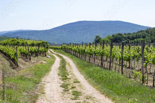 Aluminium Wijngaard Wanderweg durch kroatischen Weinberg