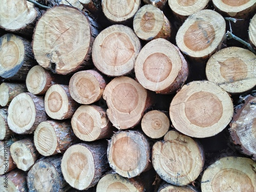 Foto op Plexiglas Brandhout textuur Wooden logs of pine woods in the forest