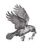 Летящий чёрный ворон, несущий ключи, сказочный посланник. Рисунок тушью на белом фоне. - 191720089