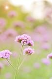 Beautiful flowers in garden - 191724427