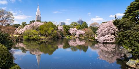Shinjuku Gyoen im Frühling, Tokio, Japan