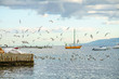 fishing boats with flock of seagulls flying around, in the port of milazzo