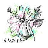 Ink hand drawn tropical hibiscus flower. Botanical element for design, Vector illustration. - 191732496