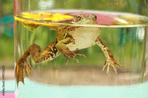 Fotobehang Kikker frog in the bank