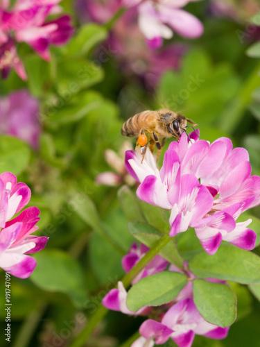 Aluminium Bee れんげ草とミツバチ