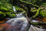 Pelaur camp waterfall with mossy rock and clean water, when heading toward to peak mount yong belar,malaysia - 191750651